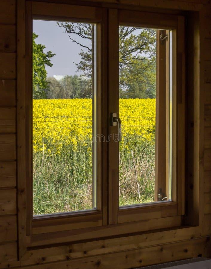 Rapsfeld vom Fenster stockfotografie