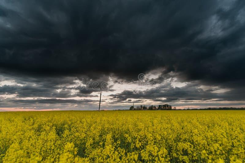 Rapsfröfält med mörk stormig molnig himmel i bakgrund arkivfoton