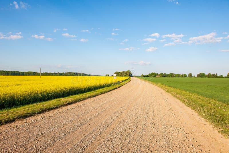 Rapssamen bloominf gelbe Felder im Fr?hjahr unter blauem Himmel im Sonnenschein stockfotografie