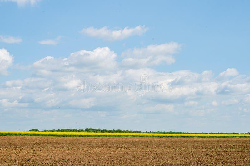 Rapssamen bloominf gelbe Felder im Fr?hjahr unter blauem Himmel im Sonnenschein stockbilder