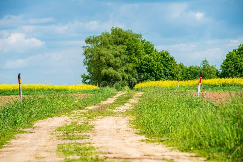 Rapssamen bloominf gelbe Felder im Fr?hjahr unter blauem Himmel im Sonnenschein lizenzfreies stockbild