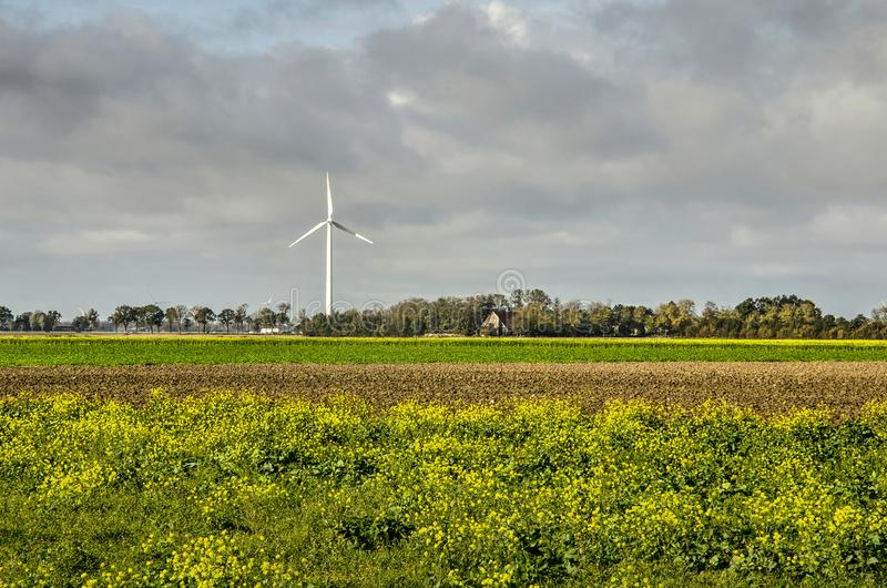 Rapssamen und Windkraftanlage auf Neuland lizenzfreie stockbilder