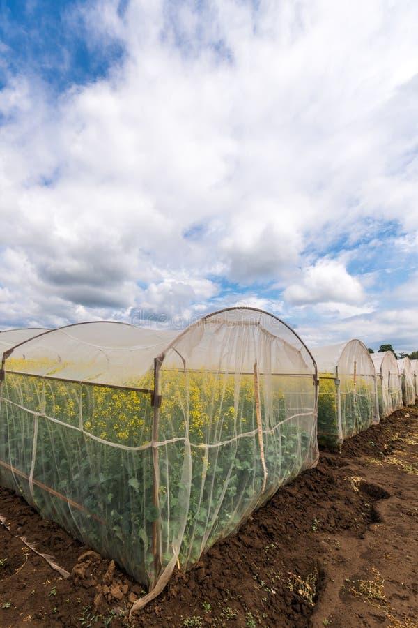 Rapstillväxt i skyddande ingrepp som förtjänar växthuset fotografering för bildbyråer