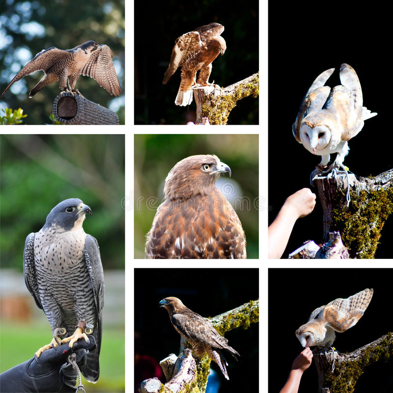 Raptor show zoo collage stock image