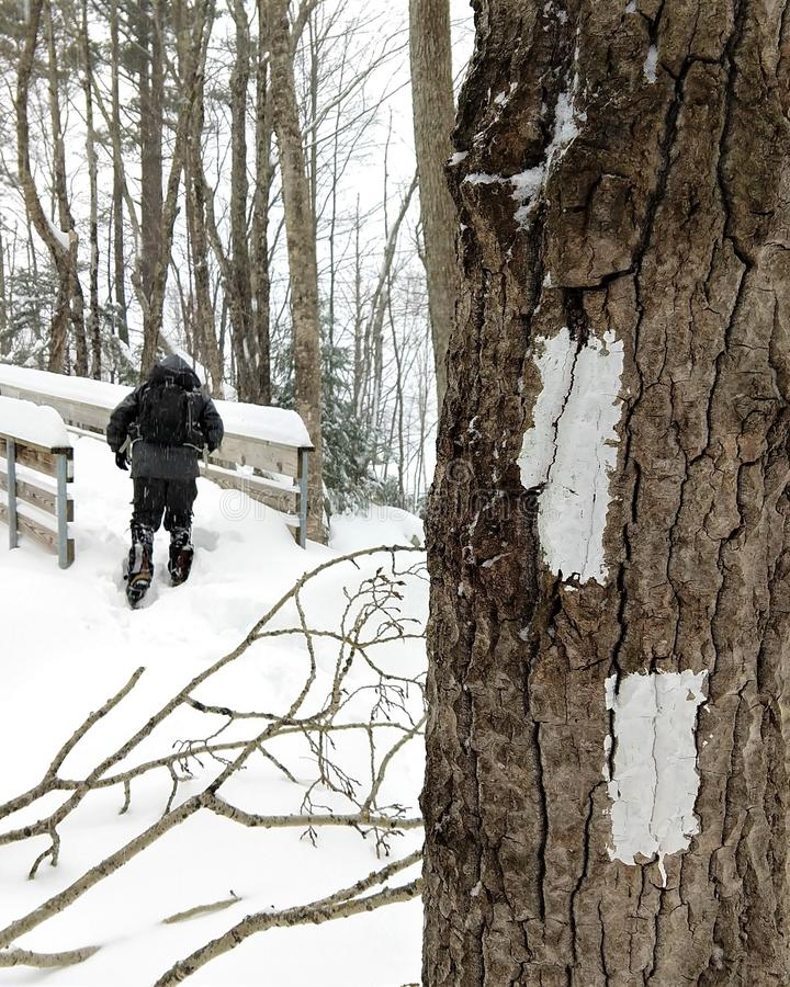 Raquetas del hombre en rastro apalache en invierno foto de archivo