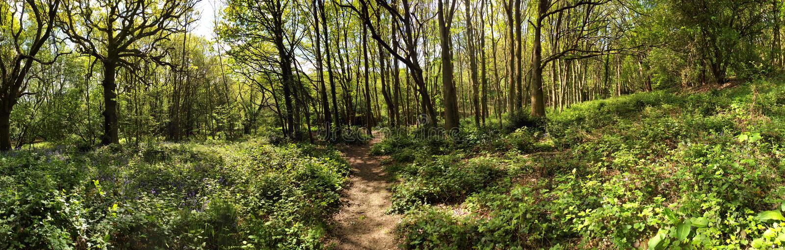 Ancient Meadow Forest royalty free stock photos
