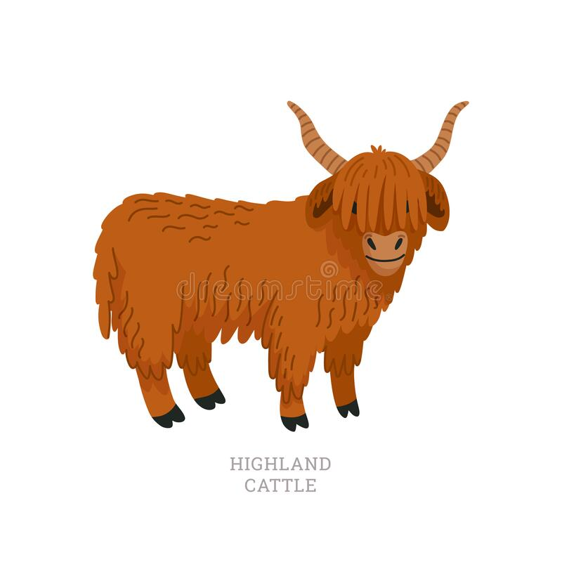 Transparent Calves Clipart - Baby Highland Cow Drawing , Free Transparent  Clipart - ClipartKey