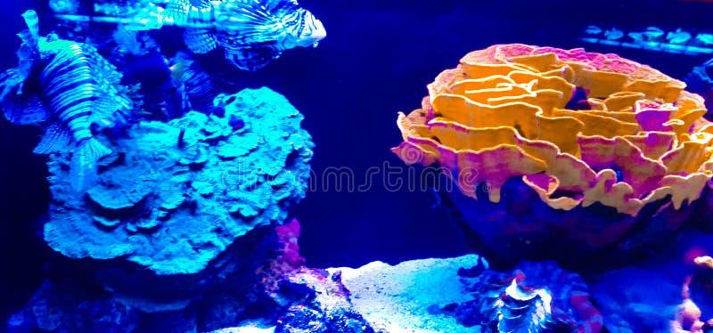 Rare fishes in aquarium royalty free stock images