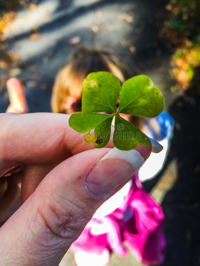 Rare four leaf clover in hand stock photo