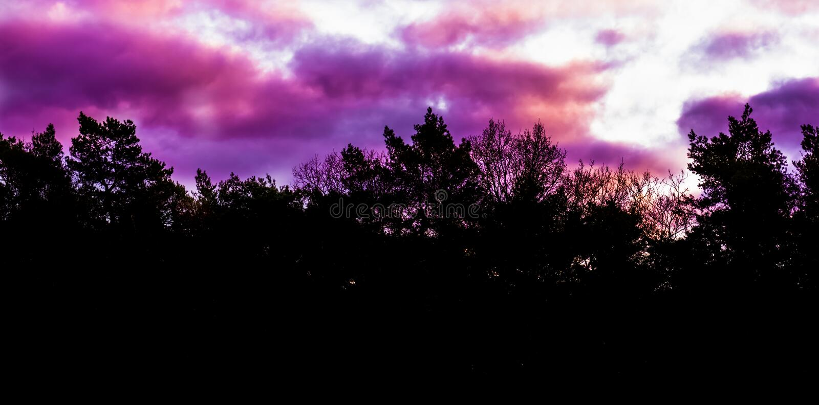 Rare winter weather phenomenon in the sky, pink and purple polar stratospheric clouds, forest landscape background stock image