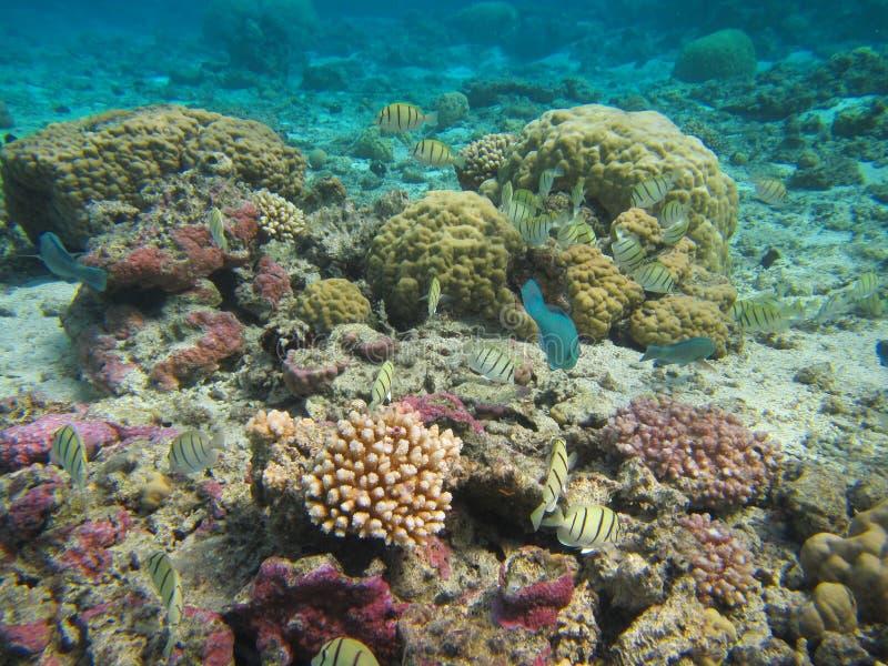 Rarotonga onderwater royalty-vrije stock foto's