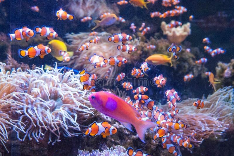 Rarotonga onderwater stock fotografie