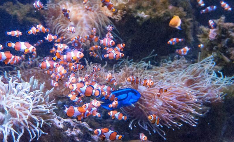 Rarotonga onderwater stock foto's