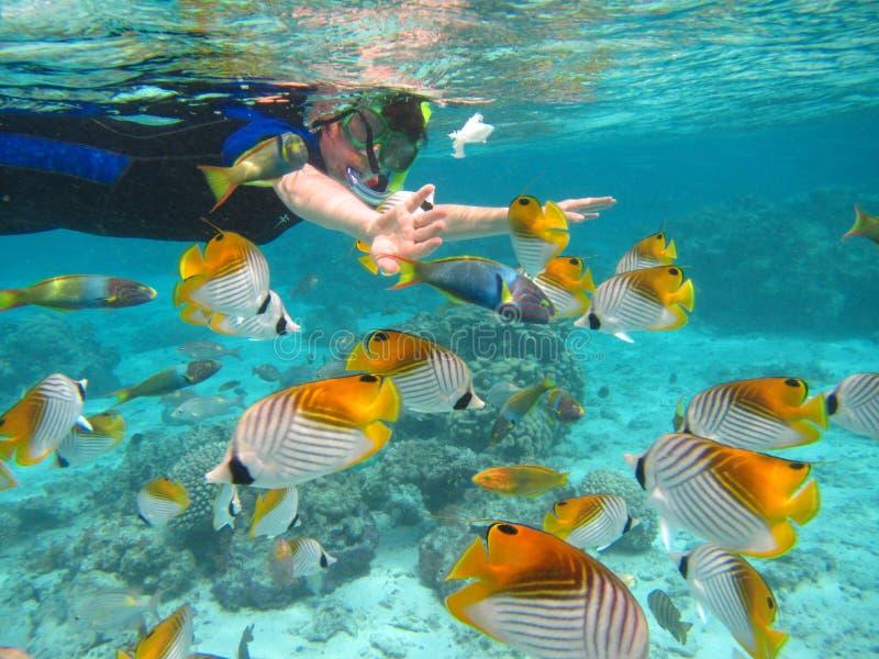 Rarotonga subacqueo fotografia stock