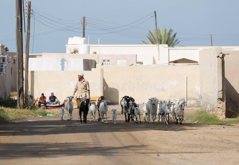 Ras Al Khaimah, Vereinigte Arabische Emirate, 2/02/18/2016, ein Arabermann führt seine Ziegen durch und verlassenes Dorf in den U lizenzfreie stockbilder