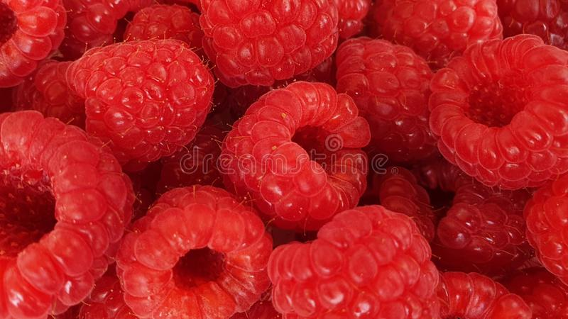 Rasberries obrazy royalty free