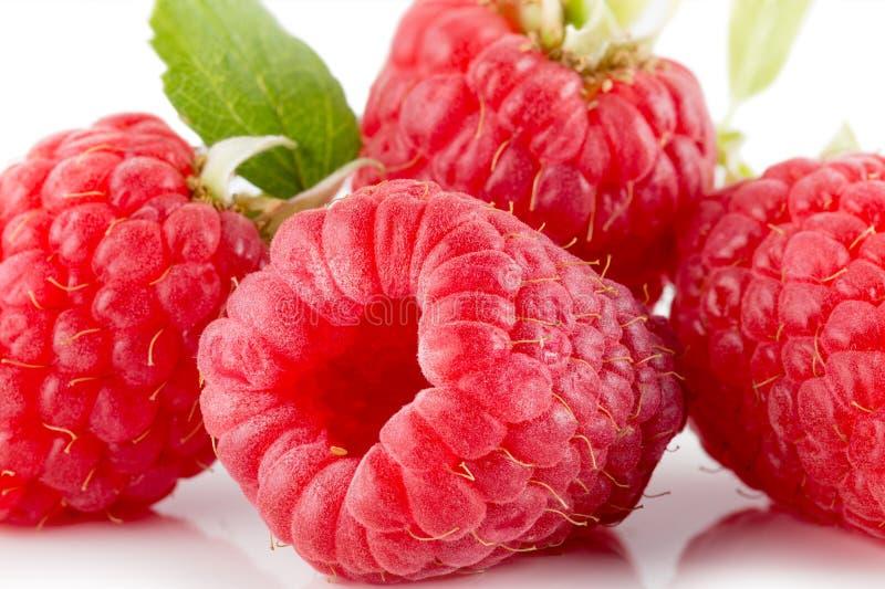 Rasberries aisló en el fondo blanco fotografía de archivo