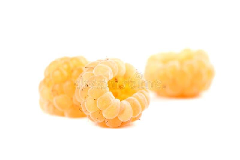 Rasberries amarelos orgânicos fotos de stock royalty free