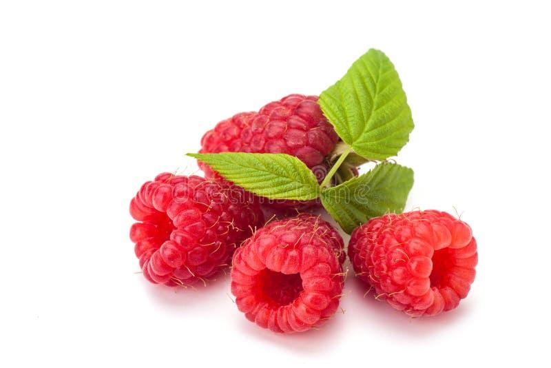 Rasberry στοκ εικόνες
