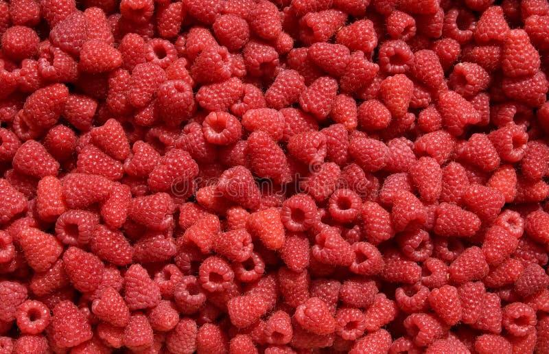 Rasberry background stock photography