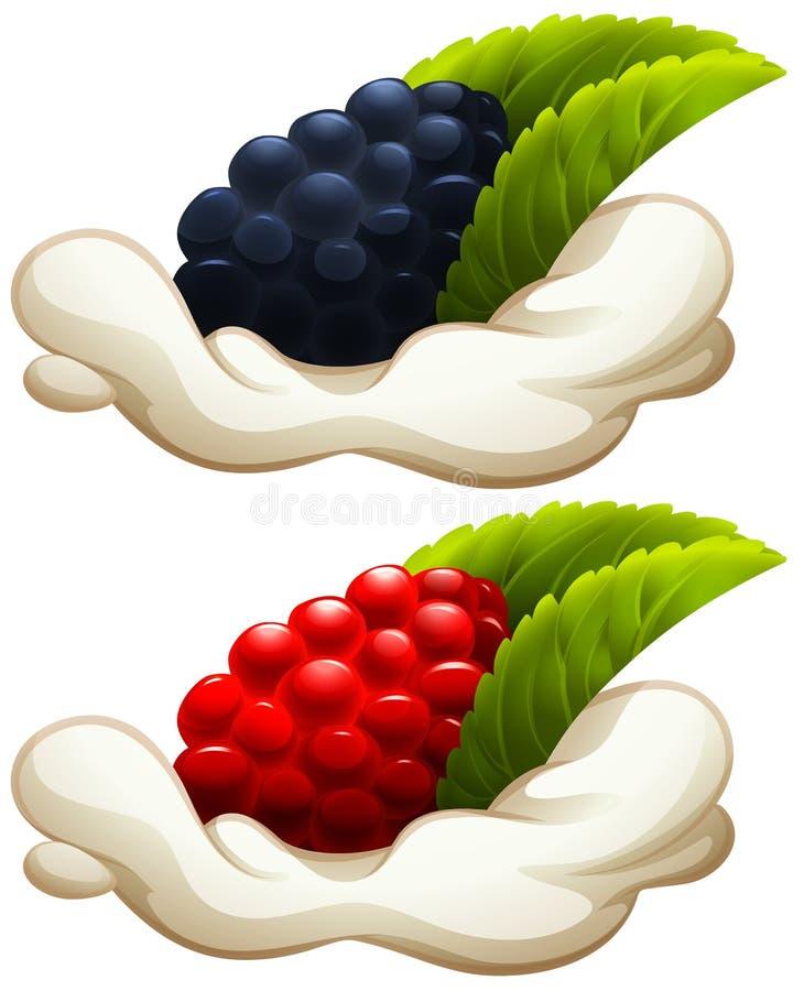 Rasberry et mûre sur la crème illustration stock