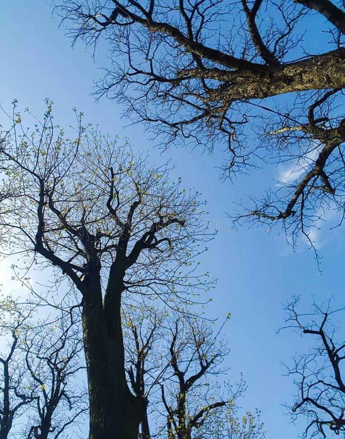 Rascacielos de la naturaleza del árbol imagenes de archivo