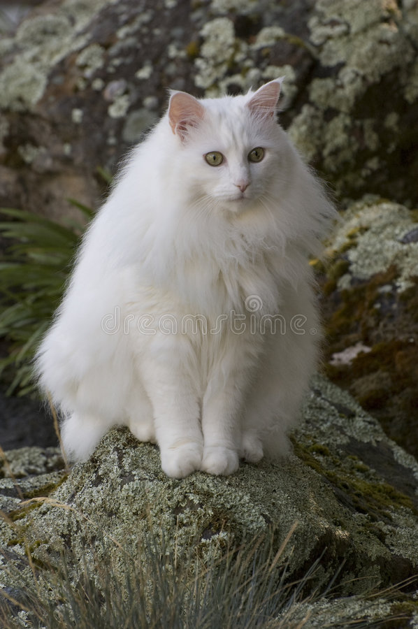 Download Rascal on his Rock stock photo. Image of green, white - 6430130