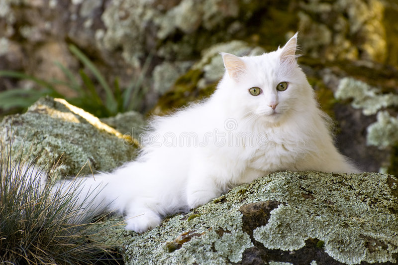Rascal In AM On Rocks Royalty Free Stock Photos