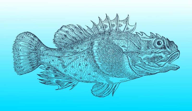 Rascasso do Shorthorn ou escorpião de mar curto-spined na opinião do perfil após um mal histórico ou do vintage do bloco xilográf ilustração stock