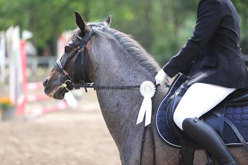 Rasecht sportpaard die winnaarstrofee na de concurrentie dragen royalty-vrije stock foto
