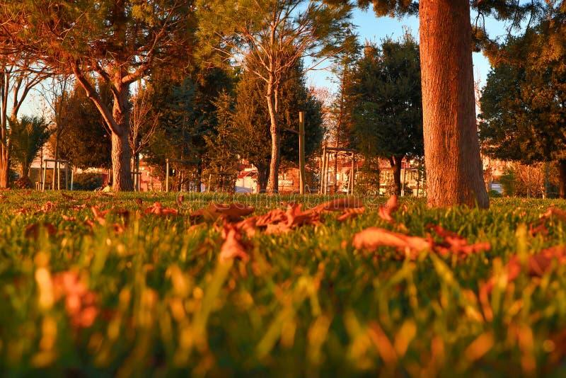 Rasen am Abend stockfotos