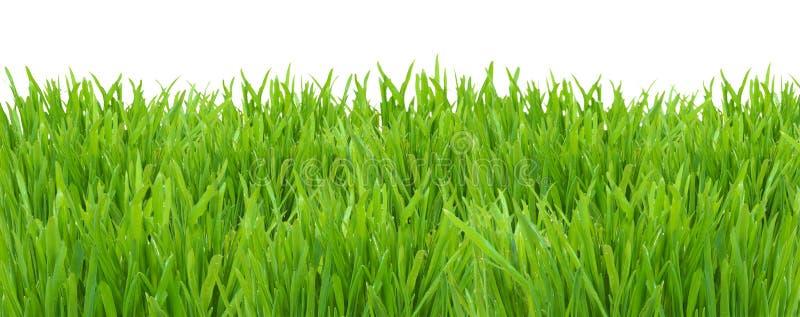 Rasen des grünen Grases lokalisiert auf weißem Hintergrund lizenzfreie stockfotografie