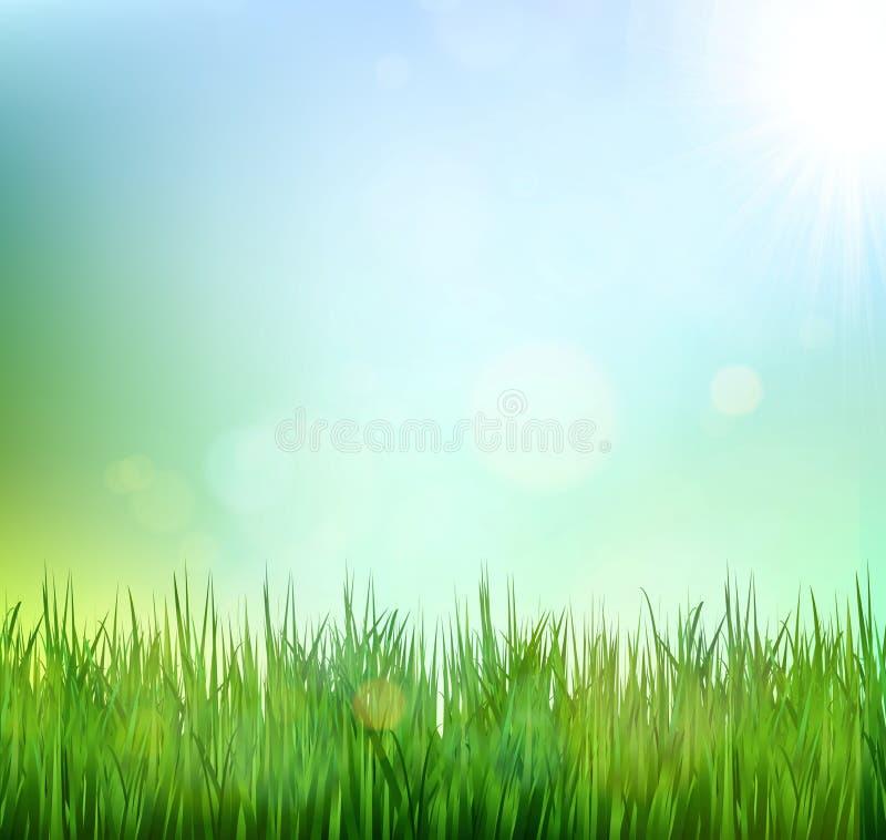 Rasen des grünen Grases mit Sonnenaufgang auf blauem Himmel Blumennaturfrühlingshintergrund stock abbildung