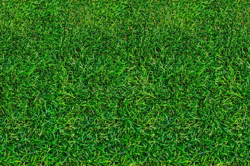 Rasen, grünes Gras im Sommer Ansicht von oben Nahaufnahme, natürlicher Hintergrund stockfoto