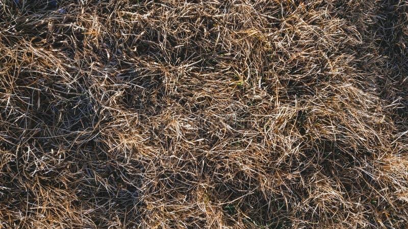 Rasen im Winter horizontal stockbild