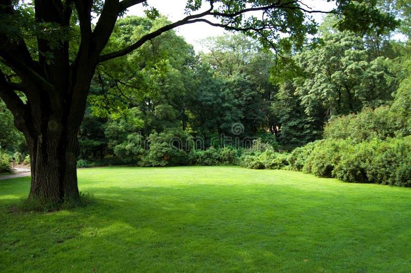 Rasen mit einem alten Baum stockfoto