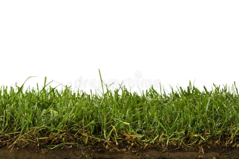 Rasen und Bodenquerschnitt getrennt auf Weiß stockfotografie