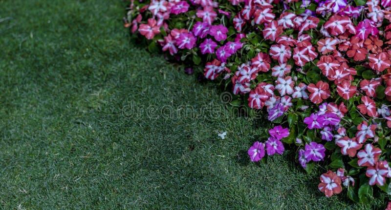 Rasen und Purpur/rote Blumen auf die Oberseite lizenzfreie stockfotografie