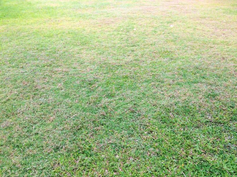 Rasen und Wege des grünen Grases stockfoto