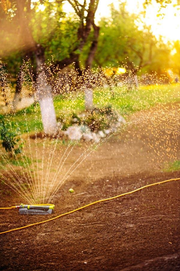 Rasenberieselungsanlagen-Sprühwasser über Gras an einem Sommerabend stockfotos