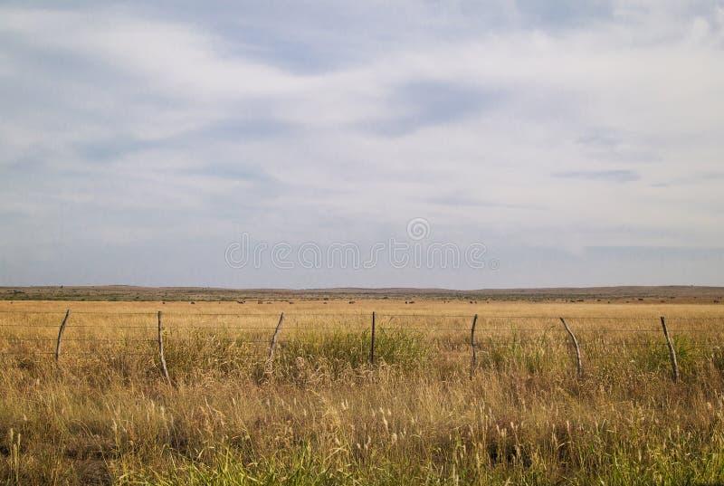 Rasenfläche im Mittelwesten lizenzfreie stockfotografie