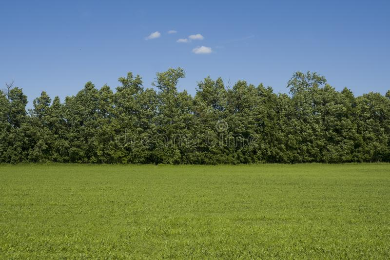 Rasenfläche-und Bäume Landschaft außerhalb der Stadt lizenzfreies stockfoto