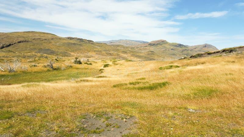 Rasenfläche und Berg an Nationalpark Torres Del Paine lizenzfreie stockbilder