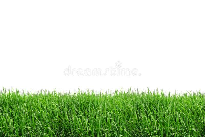 Rasenflächeisolat lizenzfreies stockbild