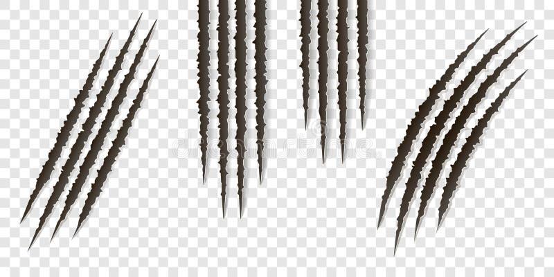 Rasguños de las garras de la suposición - aislados Cortes gato animal, perro, tigre, león de las garras ilustración del vector
