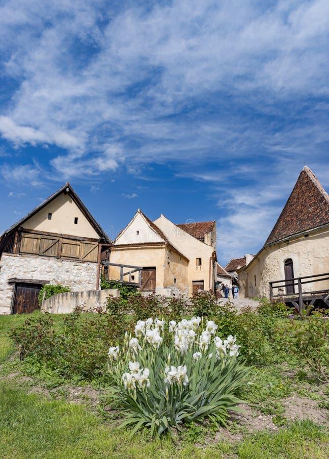 Rasnov Rumänien - Maj, 2017: Vårsikt av den inre countryarden för Rasnov citadell, i det Brasov länet (Rumänien), med att blomma  arkivbilder