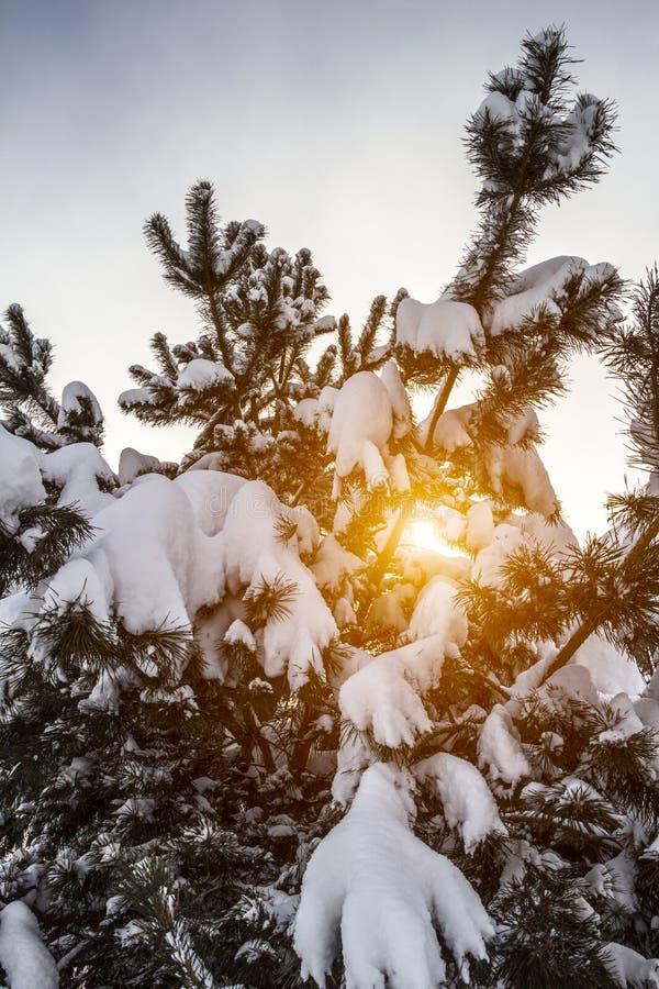 Raspa de arenque en la nieve foto de archivo libre de regalías
