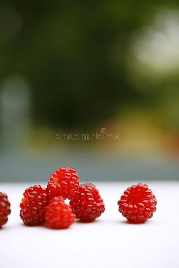 Download Raspberries stock image. Image of food, raspberries, five - 10266889