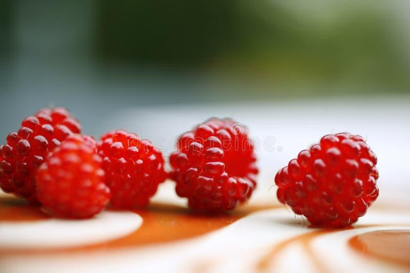 Download Raspberries stock photo. Image of raspberry, fresh, blur - 10266890