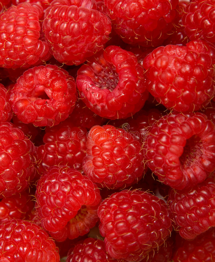 Free Raspberries Royalty Free Stock Images - 12162339